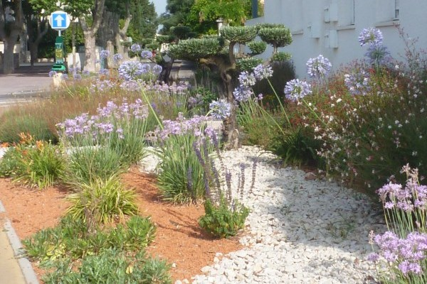Massif de plantes méditerranéennes